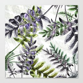 Vintage Ferns Canvas Print