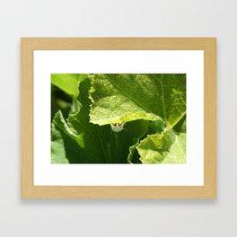 Peek-a-boo Moth Framed Art Print