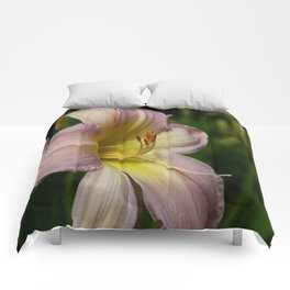 Lovely Lily Comforters