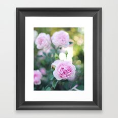 Magic Hour Roses Framed Art Print