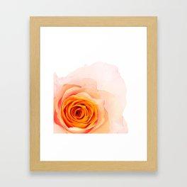 Light Orange Rose Framed Art Print