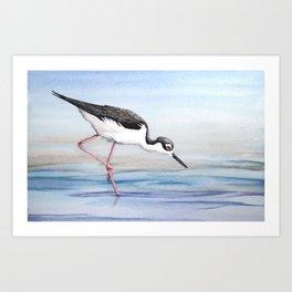 Black-necked Stilt Art Print