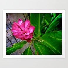 Hawaii's Bloom Art Print