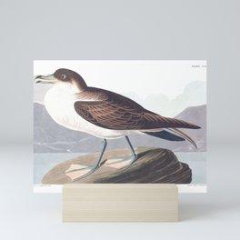 Wandering Shearwater by John Audubon Mini Art Print