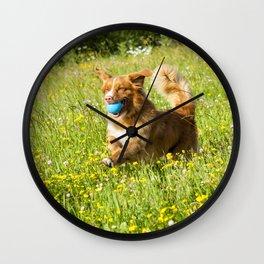 Nova Scotia Duck Tolling Retriever Dog Wall Clock