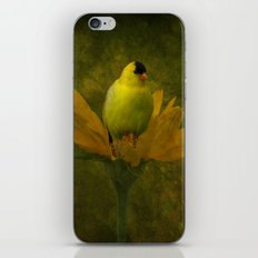 A Family of Goldfinch iPhone & iPod Skin