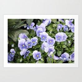 Longwood Gardens Orchid Extravaganza 56 Art Print