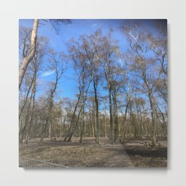 Hiking Forest Trees Metal Print