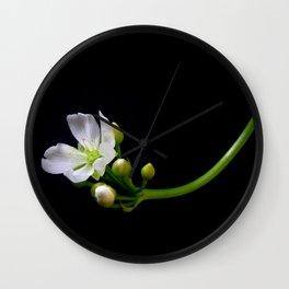 Blossom of a Venus Trap  Wall Clock