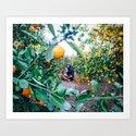 Valencian Orange Grove by theworldwalk
