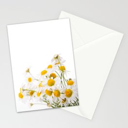 Many white flowerheads of chamomile bunch Stationery Cards