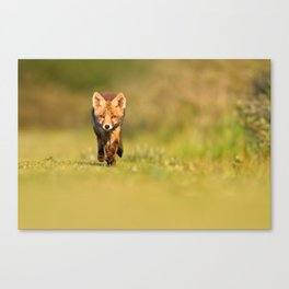 The New Kit on the Grass - Red Fox Cub Canvas Print