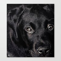 lab Canvas Prints featuring Black Lab by Jim Pavelle
