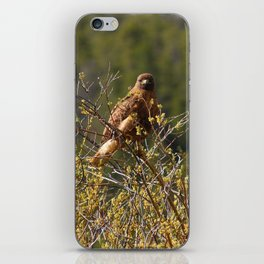 Red-tailed Hawk in the Tetons iPhone Skin