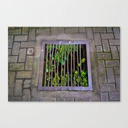 Plant Food Canvas Print