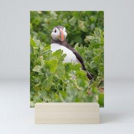 Wildlife ocean puffin birds portrait Mini Art Print