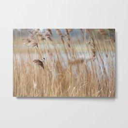 Common Reed Bunting Metal Print