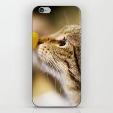 Tabby and the Flower iPhone & iPod Skin