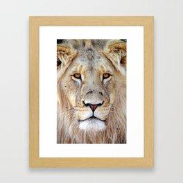 Lion Face Framed Art Print