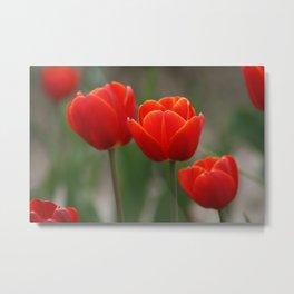 Red Orange Tulip Metal Print