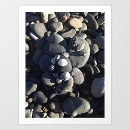Composition with Shells and Stones Art Print
