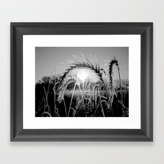 Wheat Sunrise B&W Framed Art Print