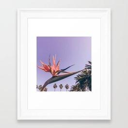 Birds of Paradise Print {2 of 3} | Palm Trees Ocean Summer Beach Magenta Photography Art Framed Art Print