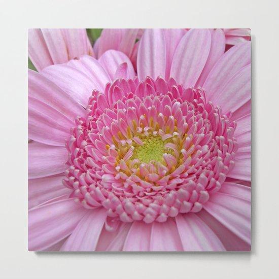 pink gerbera macro I Metal Print