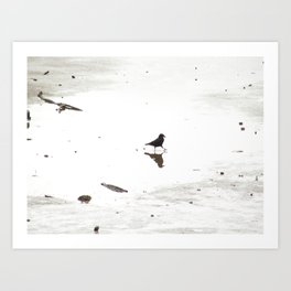 Crow doing a dance in a puddle Art Print