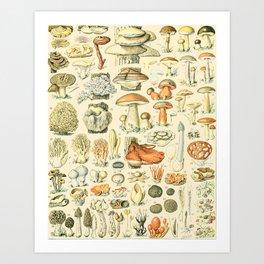 Mushroom Diagram // Champignons II XL by Adolphe Millot 19th Century Science Textbook Artwork Art Print