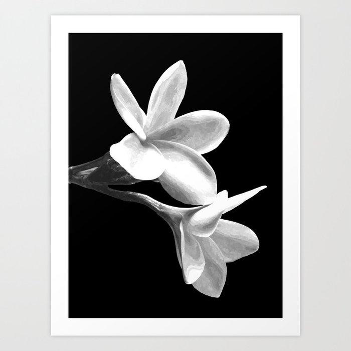 White Flowers Black Background Kunstdrucke