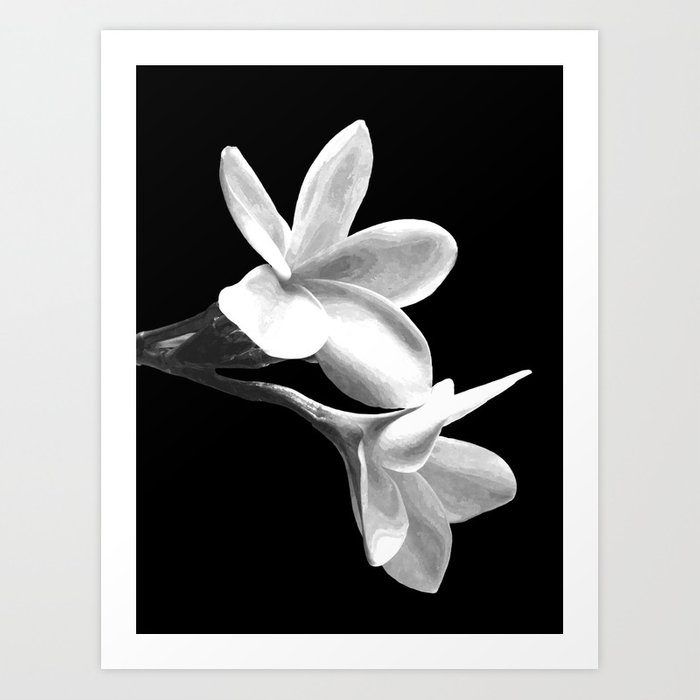 White flowers black background art print by alemi society6 white flowers black background art print mightylinksfo