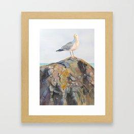 Seagull on the Brenton Point Monument Newport Rhode Island RI Framed Art Print