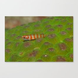 The little fish on the green hills Canvas Print