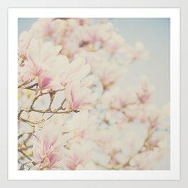 pink magnolia blossoms ... Art Print
