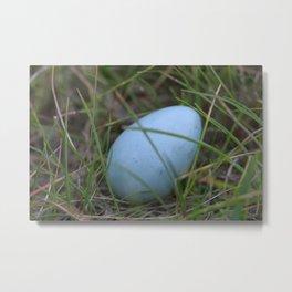 Little blue egg Metal Print