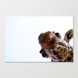 Playful Giraffe Canvas Print