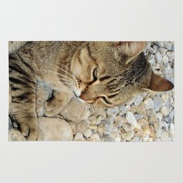 Relaxed Tabby Cat Against Stones and Pebbles Rug