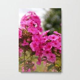 Flowering geranium Metal Print