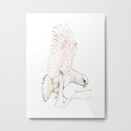 Mr Kea, New Zealand native parrot Metal Print