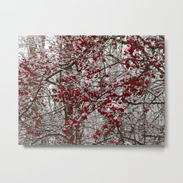 Hawthorn bush in winter Metal Print