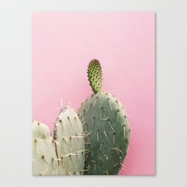 Cacti and pink II Canvas Print