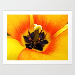 Heart of a Tulip ~ Macro Shot of Stamen & Pistil ~ Flora Photography  Art Print