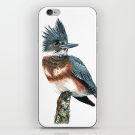 Belted Kingfisher iPhone Skin
