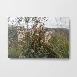 Northern Forest Metal Print