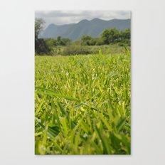 too much grass Canvas Print