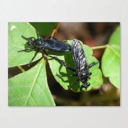fly sex Canvas Print