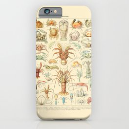Sea Creatures // Crustaces by Adolphe Millot 19th Century Science Textbook Diagram Artwork iPhone Case