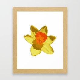Spring Daffodil Vector Isolated Framed Art Print