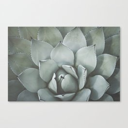Agave no. 2 Canvas Print